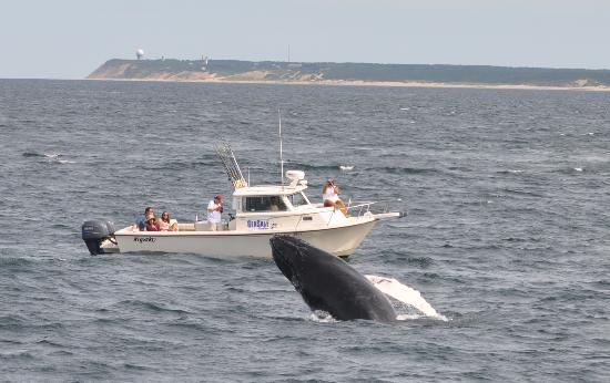 Hyannis Whale Watcher Cruises: Baby entertains...