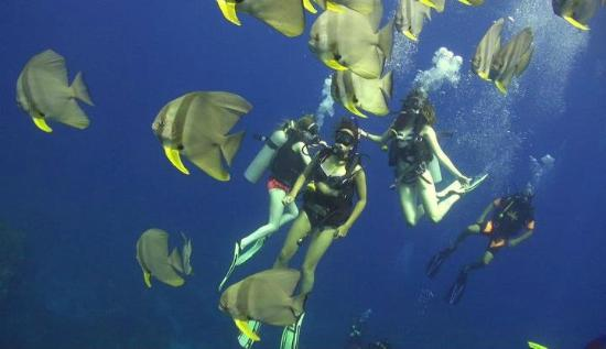 Asia Divers Resort: Stills from our underwater film