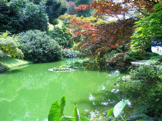 Laghetto del giardino giapponese foto di i giardini di for Laghetto i giardini