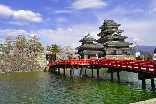 Matsumoto Castle: 赤い橋とお城と桜