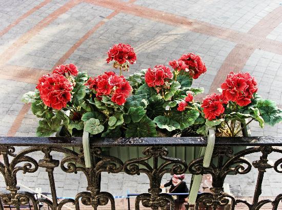 Anemon Galata: Flowers