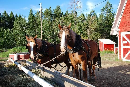 Spruce Hill Resort & Spa **CLOSED FOR RENOVATIONS - OPENING JULY18th **: Horses on our evening hay ride