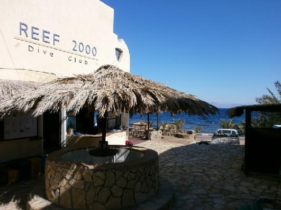 Reef 2000