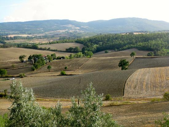 Podere Il Biancospino: The view from the terrace