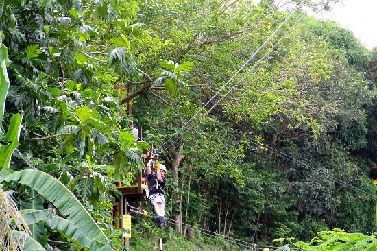 Rain Forest Zipline Corp.: 11 year old
