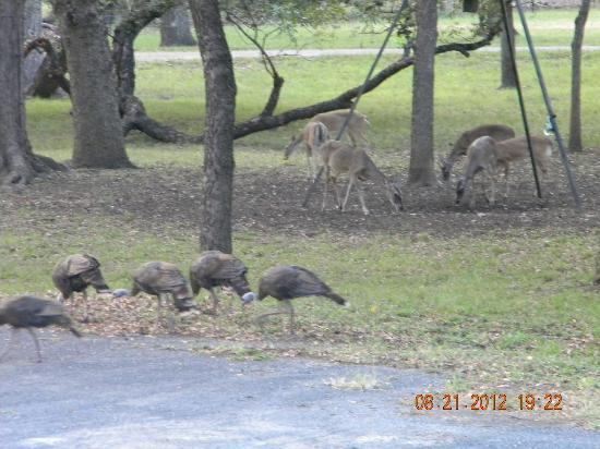 Utopia on the River: Deer and Wild Turkey