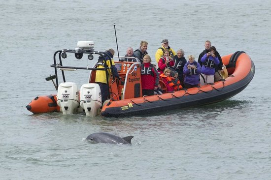 A Bay To Remember Wildlife Boat Trips: Watching Dolphins at Mwnt
