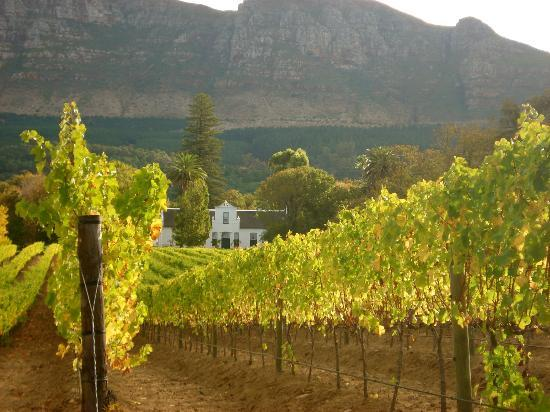 The Wine Experience: Constantia