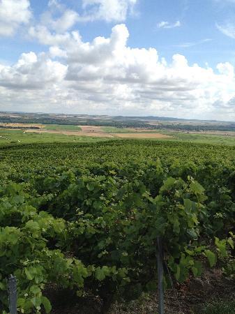 Le Phare de Vezernay: champagne