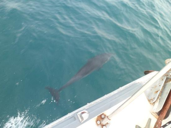 Pelican Eyes Resort & Spa: Dolphins in our sailing trip