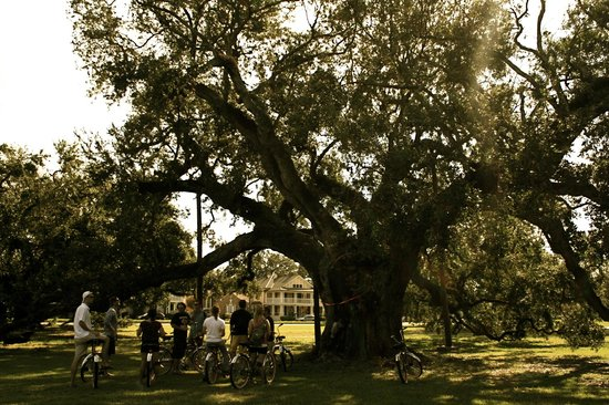 FreeWheelin' Bike Tours (New Orleans, LA): Top Tips Before