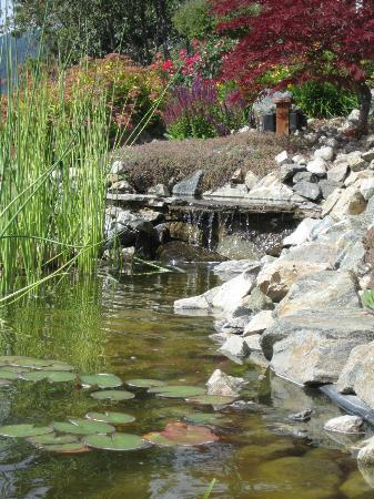 Okanagan Oasis B&B: Pond area.