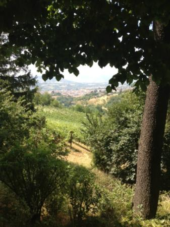 Podere Luciano: View from farm
