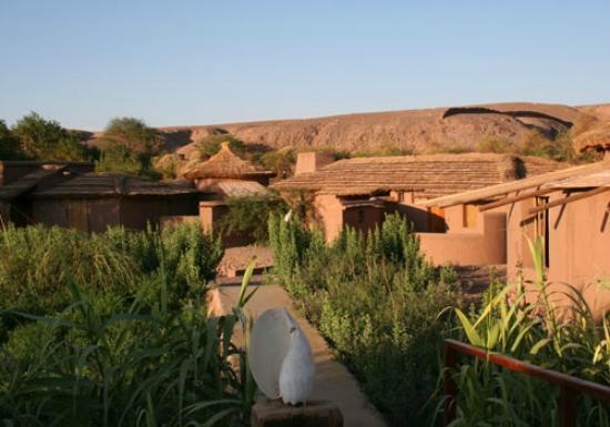 Altiplanico Atacama: Garden