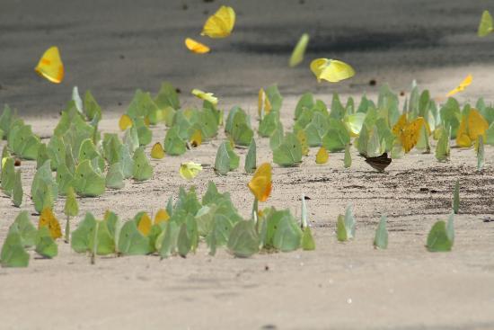 Cañón del Sumidero: farfalle