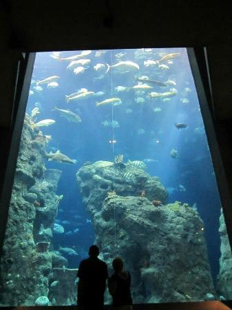 Large Viewing Area Picture Of South Carolina Aquarium