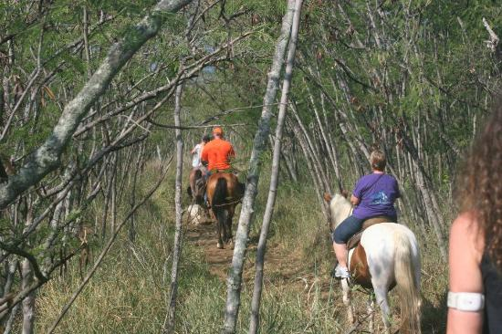 King's Trail Rides: going down the first part of the trail