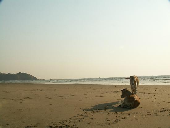 Morjim Beach: Entrance to Chapora at Turtle Beach.
