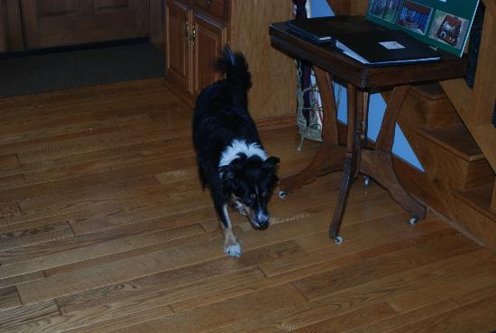 Iris Inn : Katie the resident Collie