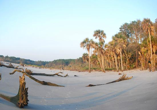 Hunting Island State Park Campground: Hunting Island