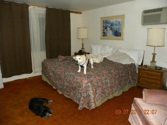 Beachcomber Motel: The other beagle hound.