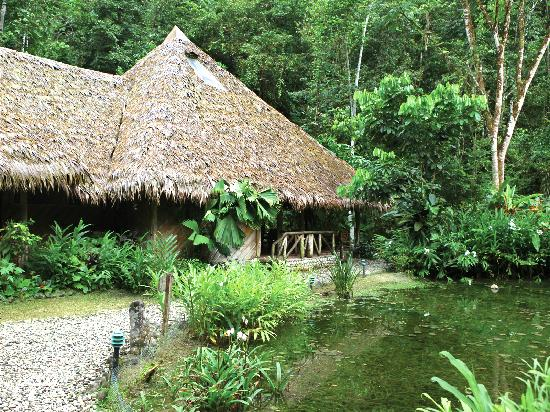 Esquinas Rainforest Lodge : Main lodge surrounded by jungle