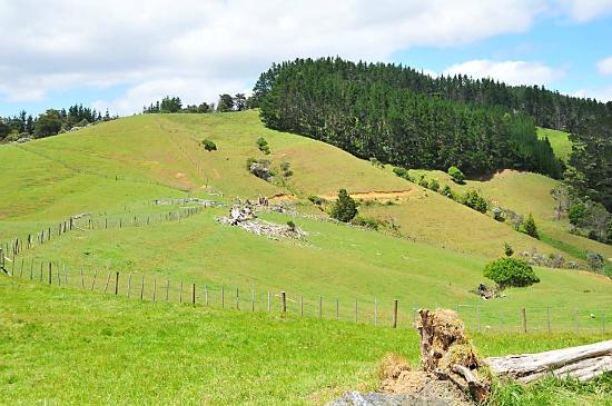 Wayby, New Zealand: Walk up the Hills