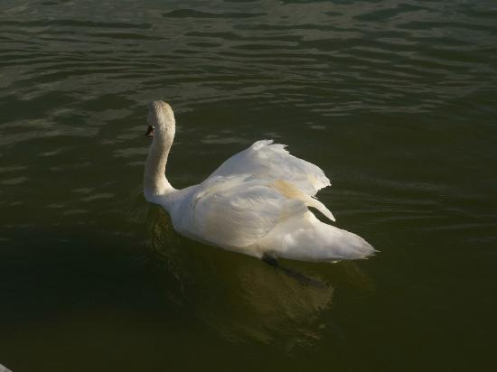 West Shore Beach: One of the residents of the West Shore boating lake