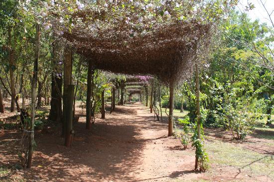 Primavera Da Serra: Caminho para chalé