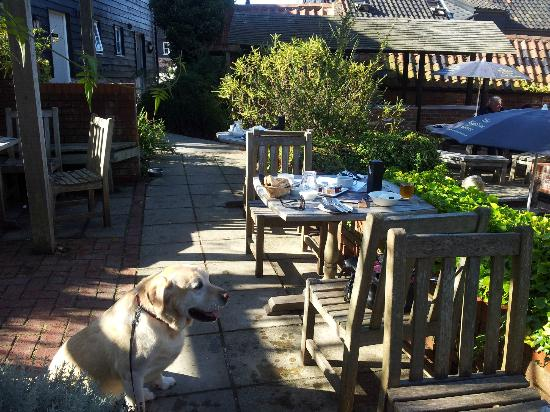 The Westleton Crown: My Labrador enjoying our breakfast in the sun at the back
