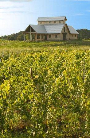 Vermilion Valley Vineyards