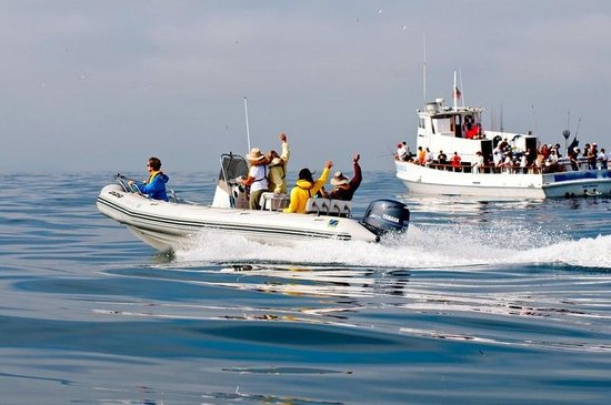Offshore Blue Adventures