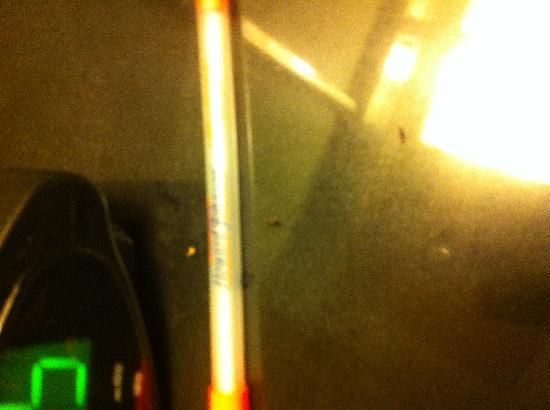 Howard Johnson Inn Washington DC: Unknown random tiny bugs all over the night stand