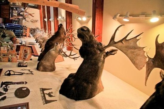Trapper's Kettle Restaurant: the moose