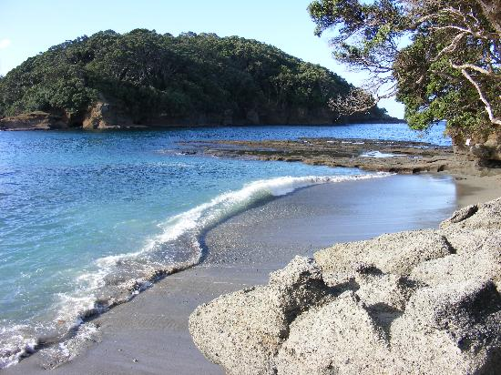 Goat Island New Zealand Tripadvisor