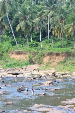 Hotel Elephant Park : River