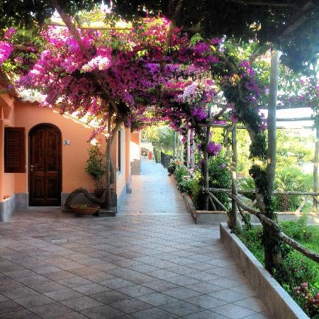 Hotel Il Girasole: Terrazza