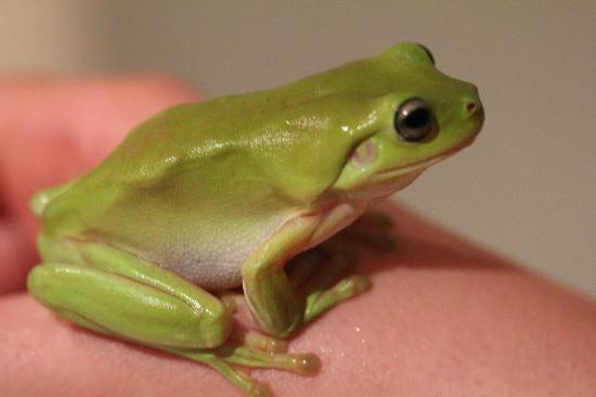Magnetic Island Bed & Breakfast: The green tree frog in the bathroom