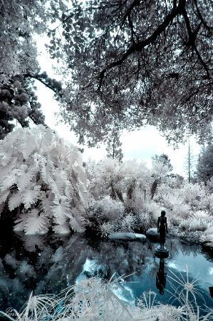 The Huntington Library, Art Collections and Botanical Gardens: Secluded mystical pond
