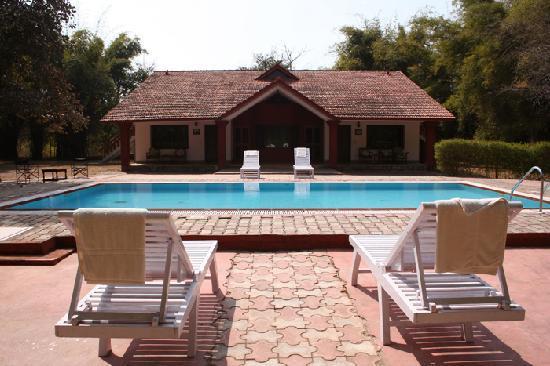 Royal Tiger Resort: Swimming Pool at RTR