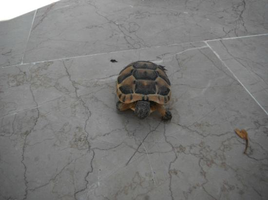 Club Hotel Sera: turtle
