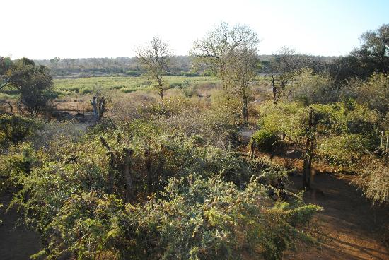 Bushwise Safaris: another view from the Bar