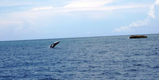 Seagullcove Lodge: Whale Jumping