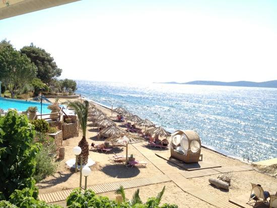 Venus Beach Hotel Bungalows: venus beach sea side