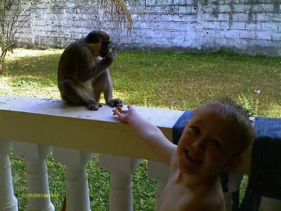 Mansea Beach Hotel: our sone feeding the passing monkeys during a morning search for food