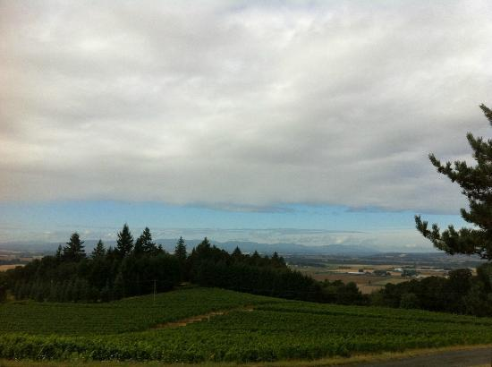 Amity Vineyards: Beautiful view from the Vineyard parking lot area