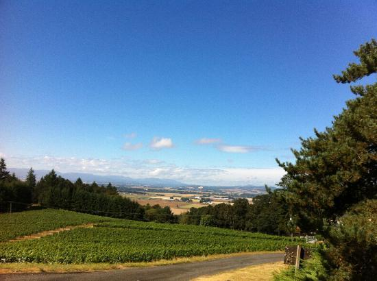Amity Vineyards: Another gorgeous view