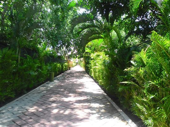 Hotel Riu Lupita: path to beach