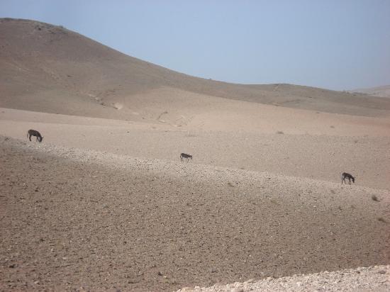 Riad Charme d'Orient: desert