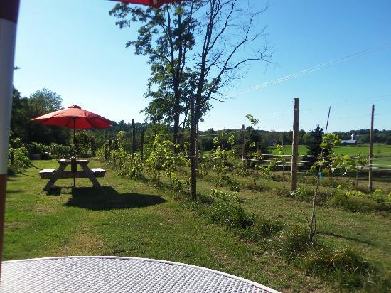 Neshobe River Winery: table we sat at